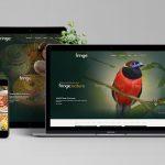 Karuna Australia web design portfolio - Rainforest World Music Festival Fringe
